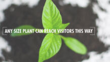 Any Size Plant Can Reach Visitors This Way