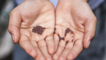 Church Planters Cultivate Seeds, But God Creates Them