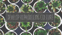Plants Must Develop Reproducing Culture—But How?