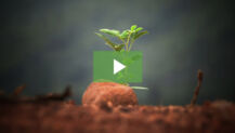 VIDEO: Vineyard Churches Announce Church Planting Summit
